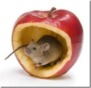 Researchers have identified a component of apple peels that helps prevent muscle weakening in mice. (Credit: © Anyka / Fotolia)